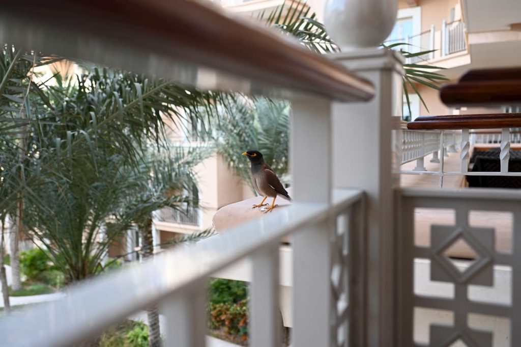 ritz-carton-dubai-club-lounge-bird