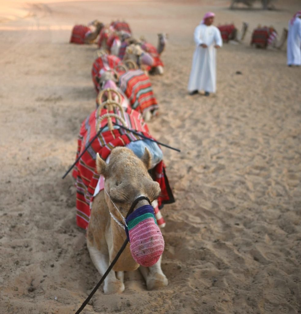 Camel Trek Al Maha