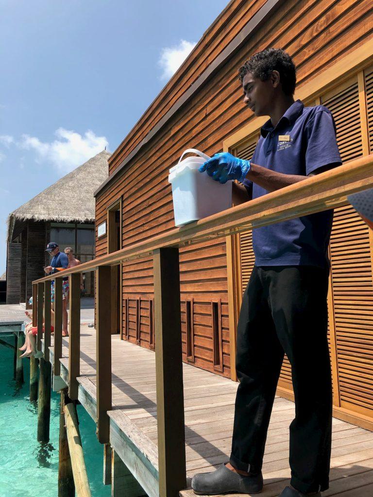mandhoo-shark-feeder-maldives-conrad